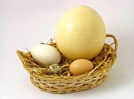 P3: Món ngon cho bà bầu - Trứng ngỗng