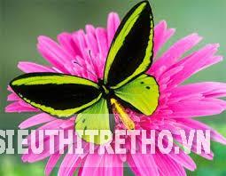 Gối thoáng khí Narforye hình con bướm
